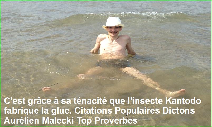 C'est grâce à sa ténacité que l'insecte Kantodo fabrique la glue. Citations Populaires Dictons Aurélien Malecki Top Proverbes