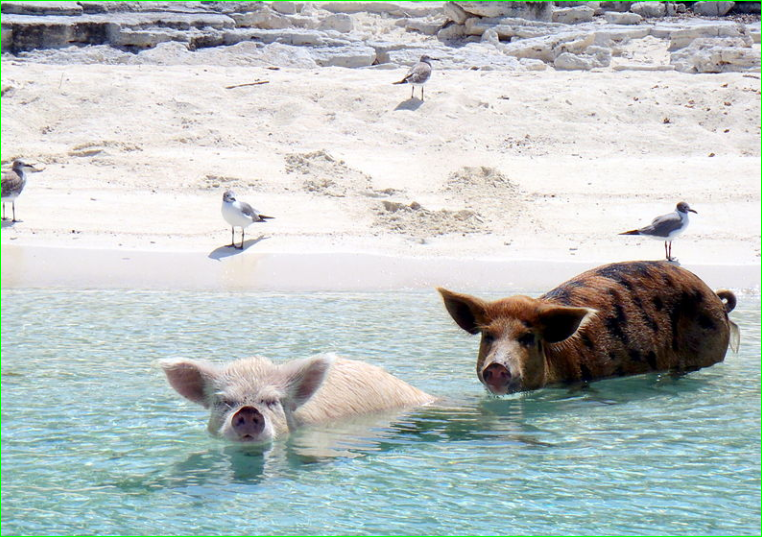 image photo BIG WATER CAY, TURK AND CAICOS