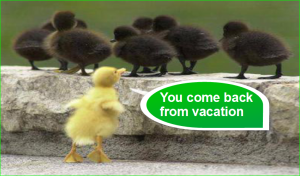 picture Photo Humor Funny Baby Duck