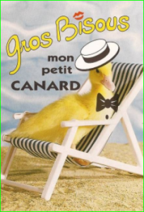 image photo Humour Canard rigolo