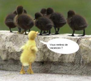 image photo Humour drôle Bébé Canard