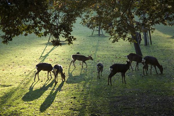 image photo Ballades dans les très beaux parcs Londoniens